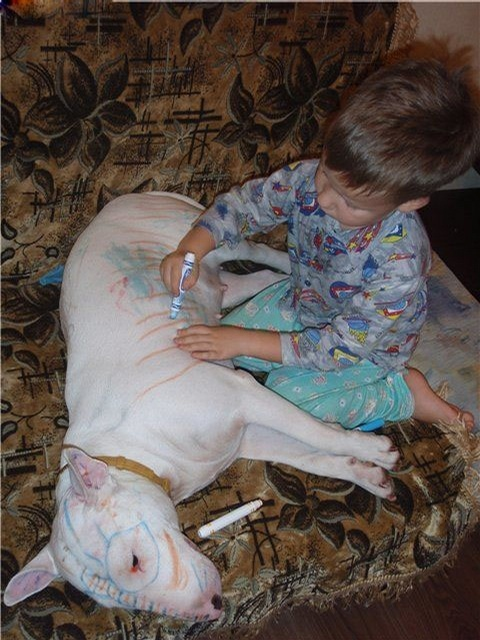 Marker on dog